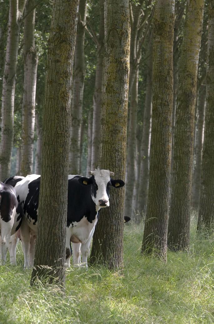 Ontwikkeling Natuurnetwerk Brabant