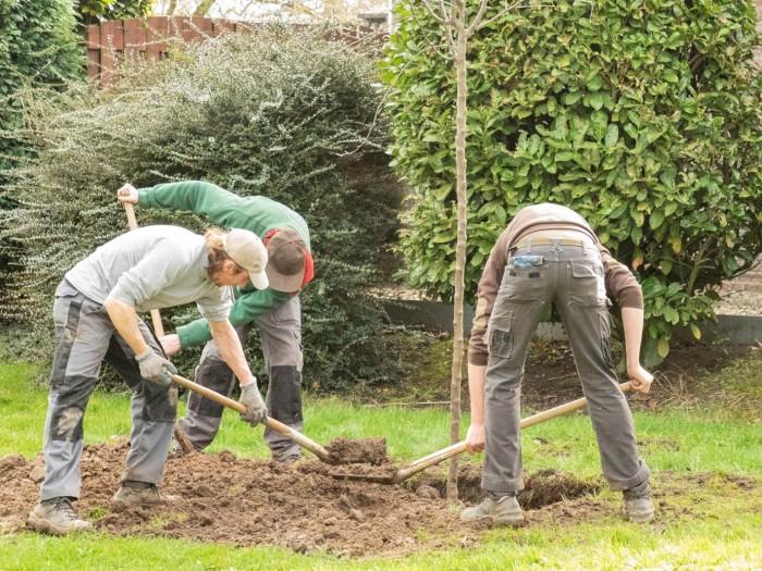 aanplant_boom_lithoijen